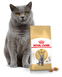 Kačių maistas Royal Canin British Shorthair Adult 10kg.