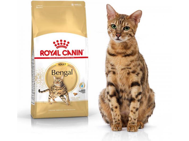 Kačių maistas Royal Canin Bengal Cat 10kg