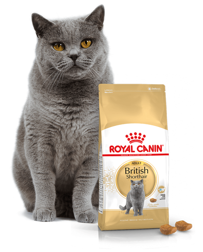 Kačių maistas Royal Canin British Shorthair Adult 2kg.