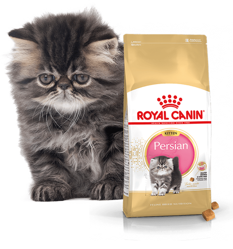 Royal Canin Persian Kitten 2 kg.
