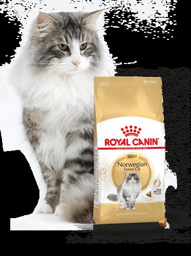 Kačių maistas Royal Canin Norwegian Cat 2kg