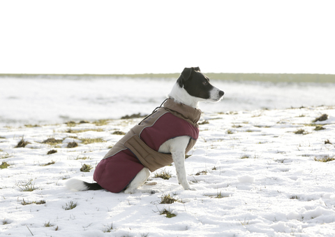 Paltas šunims Royal Pets 40cm- M