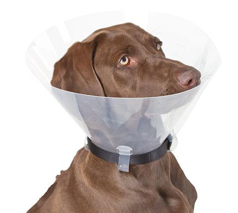 Apsauginė apykaklė šunims 22 – 25 cm -10 cm
