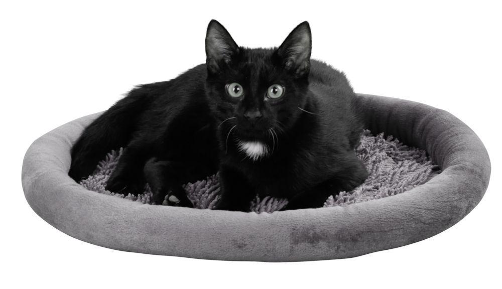 Guolis katei   40cm